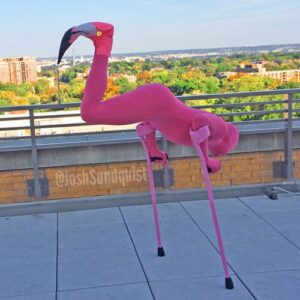 Flamingo-costume-Josh-Sundquist